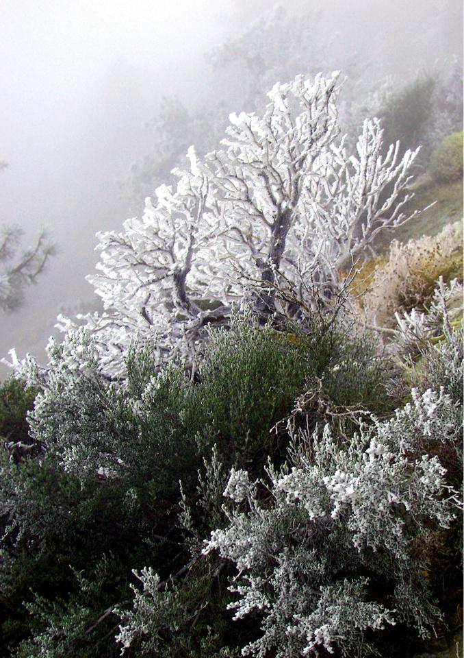 Frozen Slope-Angeles Natl Forest, CA