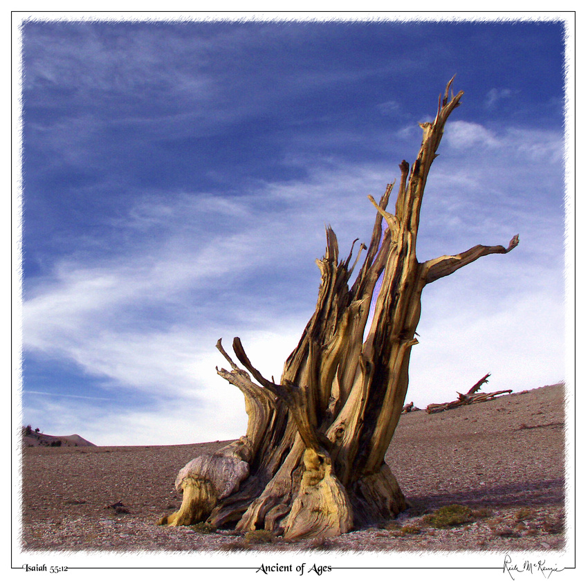 Ancient of Ages-Bristlecone Pine Forest, CA