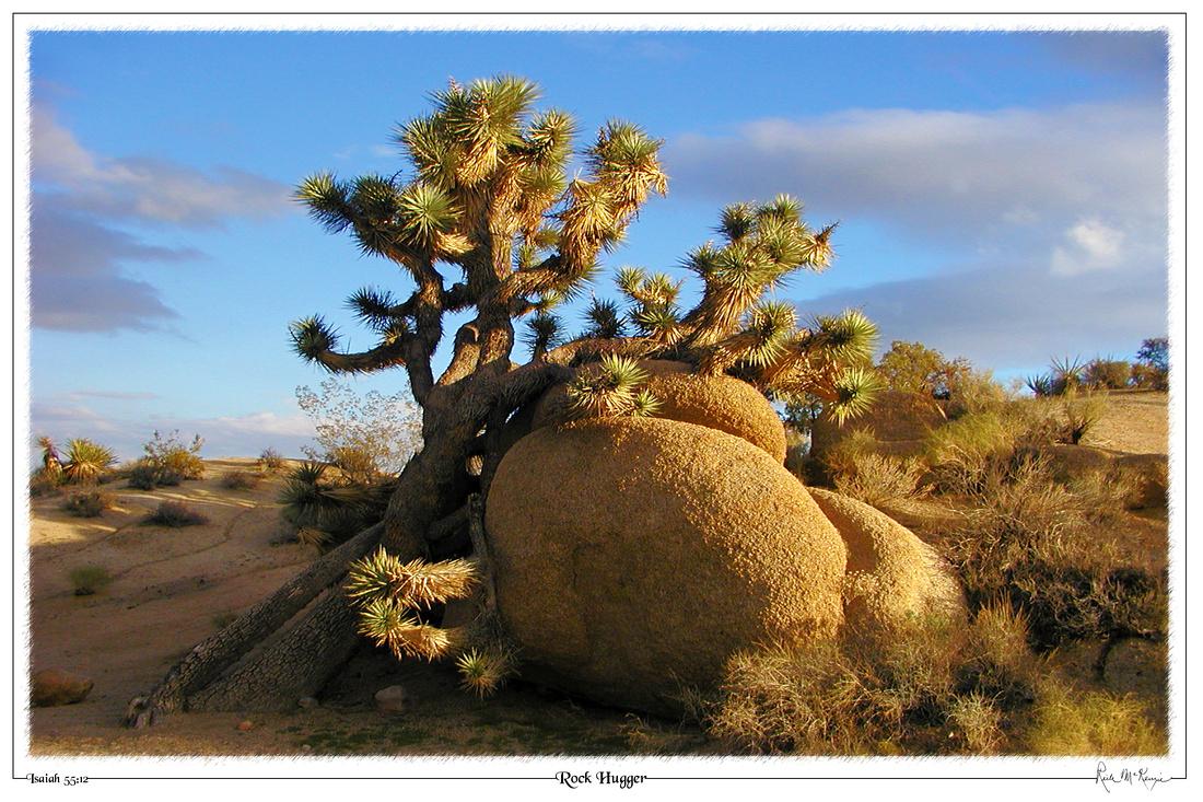 Rock Hugger-Joshua Tree National Park, CA