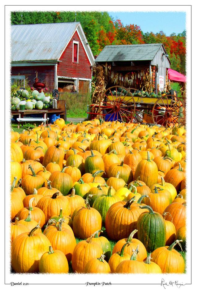 Pumpkin Patch-Lancaster, NH