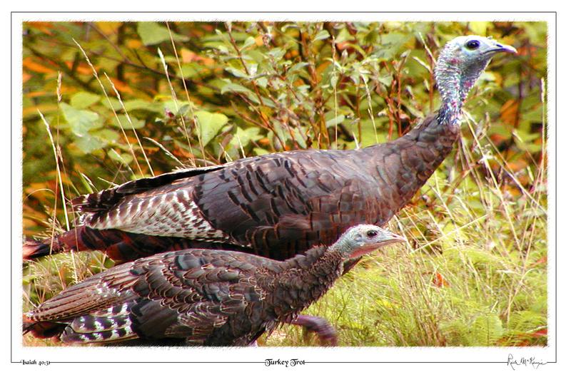 Turkey Trot-Littleton, NH