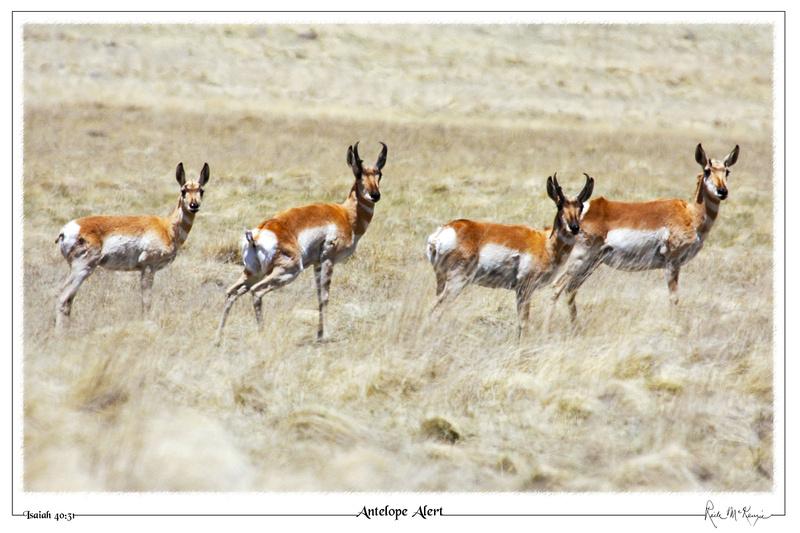 Antelope Alert-Vernon, AZ