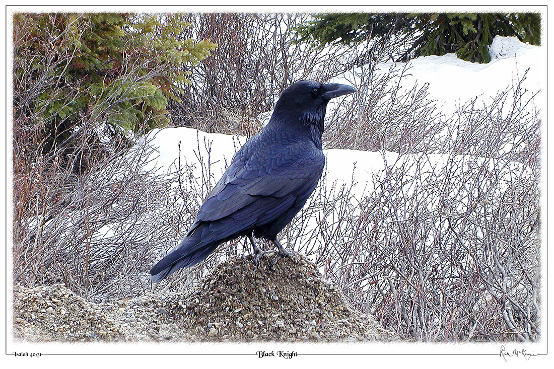 Black Knight-Raven-Jasper Natl Pk, Alberta, CAN